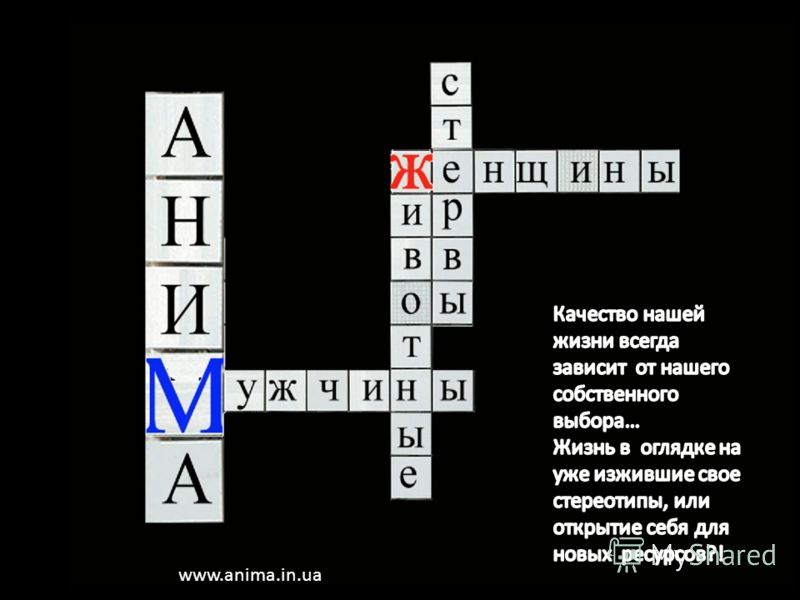 www.anima.in.ua
