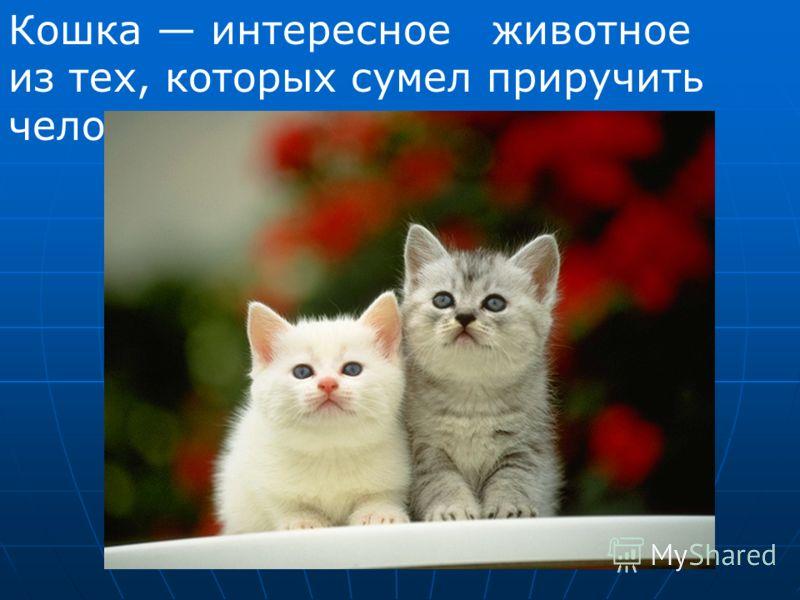 Кошка интересное животное из тех, которых сумел приручить человек.