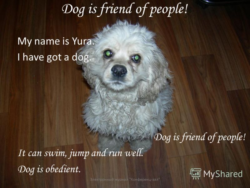 Dog is friend of people! My name is Yura. I have got a dog. Dog is friend of people! It can swim, jump and run well. Dog is obedient. Электронный журнал Конференц-зал