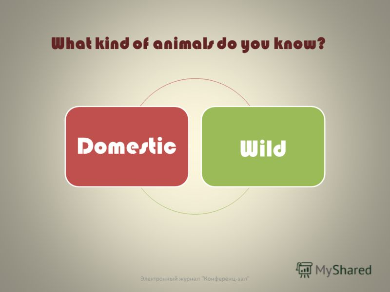 What kind of animals do you know? Domestic Wild Электронный журнал Конференц-зал