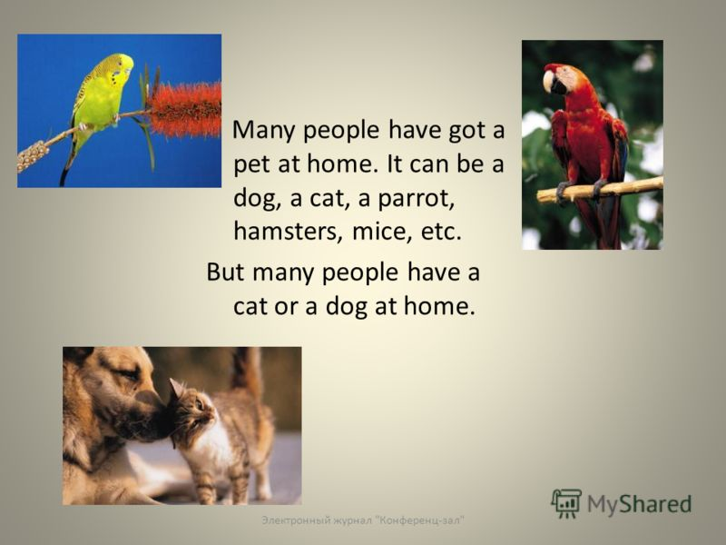 Many people have got a pet at home. It can be a dog, a cat, a parrot, hamsters, mice, etc. But many people have a cat or a dog at home. Электронный журнал Конференц-зал