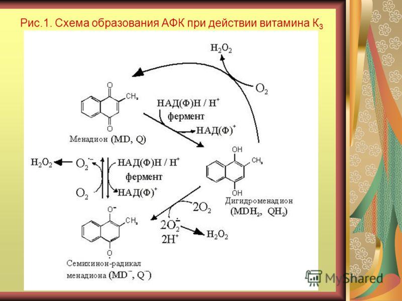 Рис.1. Схема образования АФК при действии витамина К 3