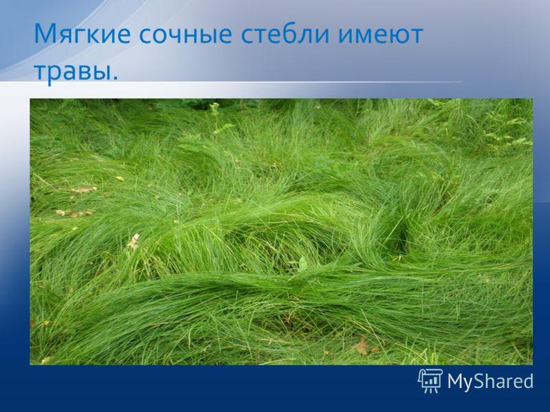 Мягкие сочные стебли имеют травы.