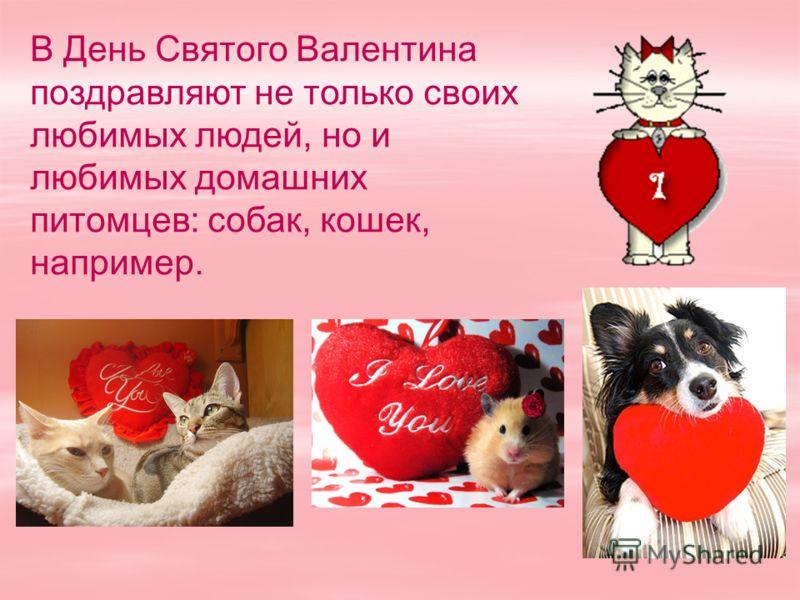 В День Святого Валентина поздравляют не только своих любимых людей, но и любимых домашних питомцев: собак, кошек, например.
