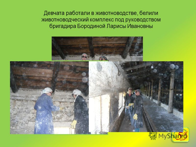 Девчата работали в животноводстве, белили животноводческий комплекс под руководством бригадира Бородиной Ларисы Ивановны