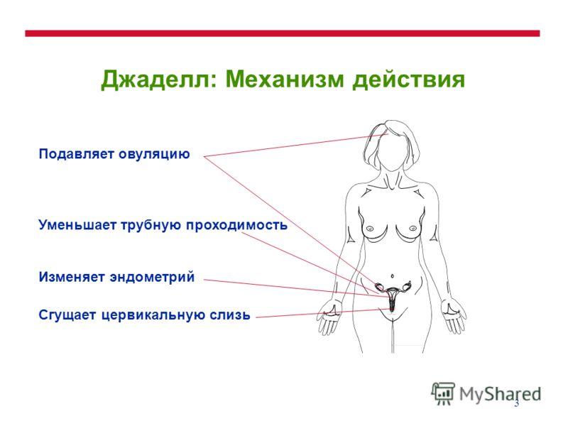 3 Джаделл: Механизм действия Подавляет овуляцию Уменьшает трубную проходимость Изменяет эндометрий Сгущает цервикальную слизь
