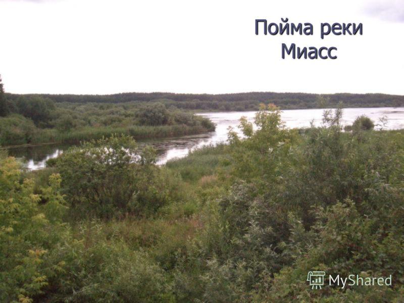 Пойма реки Миасс