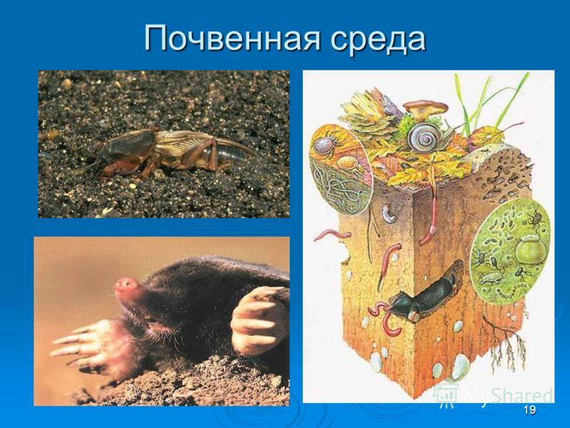 19 Почвенная среда