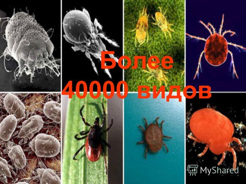 Более 40000 видов