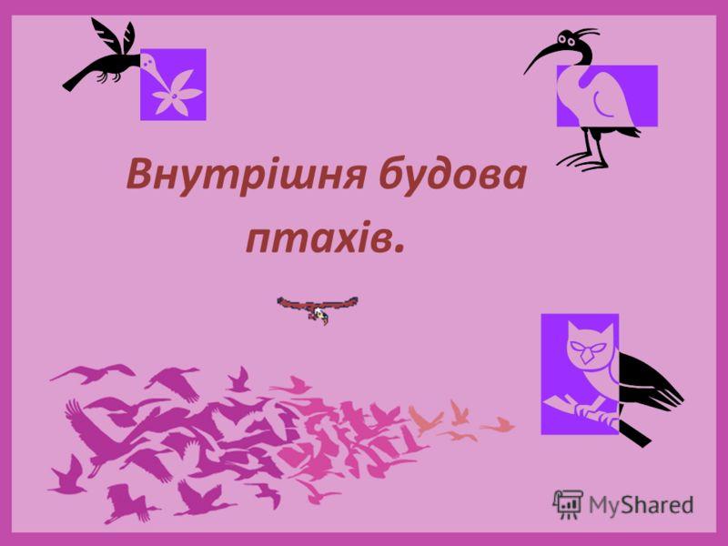 Внутрішня будова птахів.