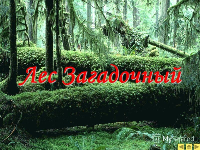 Лес Загадочный