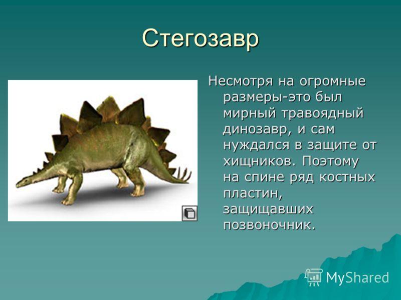 Стегозавр Несмотря на огромные размеры-это был мирный травоядный динозавр, и сам нуждался в защите от хищников. Поэтому на спине ряд костных пластин, защищавших позвоночник.