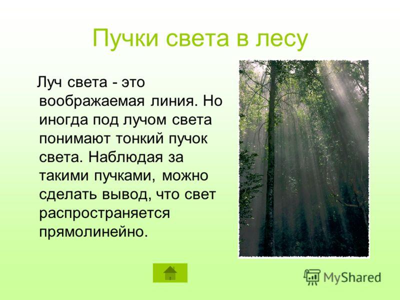 Пучки света в лесу Луч света - это воображаемая линия. Но иногда под лучом света понимают тонкий пучок света. Наблюдая за такими пучками, можно сделать вывод, что свет распространяется прямолинейно.