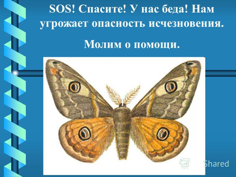 SOS! Спасите! У нас беда! Нам угрожает опасность исчезновения. Молим о помощи.