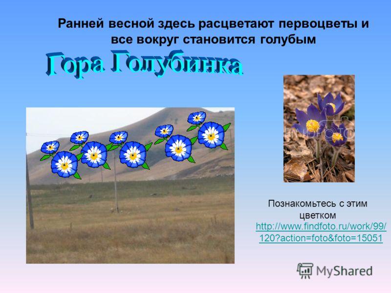 Ранней весной здесь расцветают первоцветы и все вокруг становится голубым http://www.findfoto.ru/work/99/ 120?action=foto&foto=15051 Познакомьтесь с этим цветком