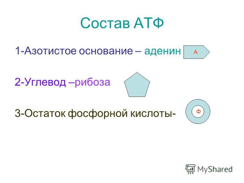 Состав АТФ 1-Азотистое основание – аденин 2-Углевод –рибоза 3-Остаток фосфорной кислоты- А Ф