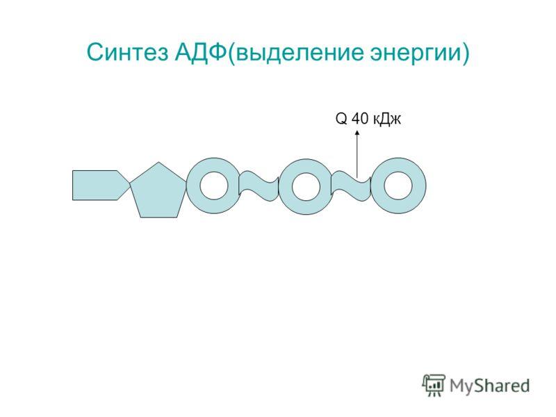 Синтез АДФ(выделение энергии) Q 40 кДж