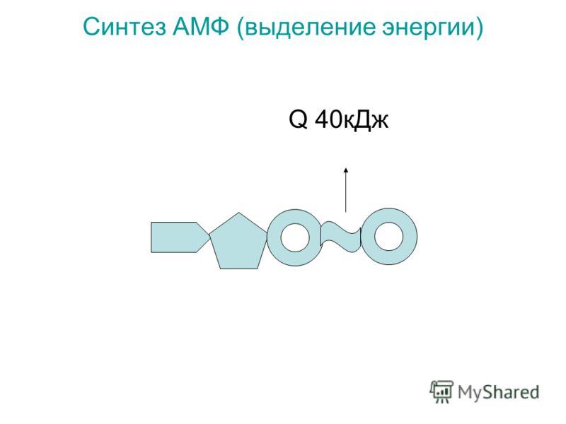 Синтез АМФ (выделение энергии) Q 40кДж