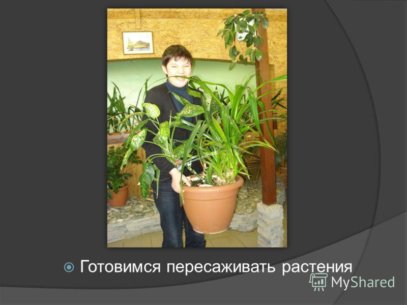 Готовимся пересаживать растения