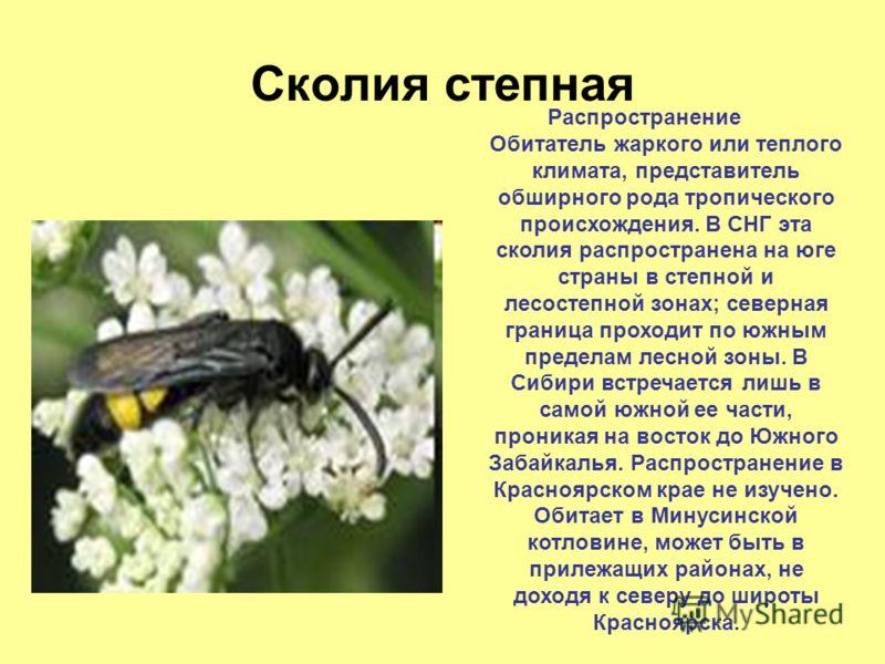 Пчела-плотник Распространение Ареал вида охватывает Палеарктику, за исключением северной ее части. В СНГ распространена южнее среднетаежной подзоны, доходя на востоке до Центральной Азии и Монголии. В крае найдена в Усинской котловине, в окрестностях