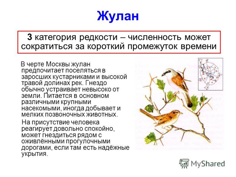 Жулан В черте Москвы жулан предпочитает поселяться в заросших кустарниками и высокой травой долинах рек. Гнездо обычно устраивает невысоко от земли. Питается в основном различными крупными насекомыми, иногда добывает и мелких позвоночных животных. На