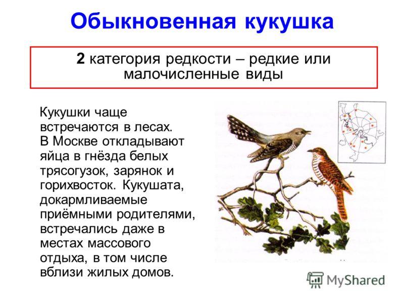 Обыкновенная кукушка Кукушки чаще встречаются в лесах. В Москве откладывают яйца в гнёзда белых трясогузок, зарянок и горихвосток. Кукушата, докармливаемые приёмными родителями, встречались даже в местах массового отдыха, в том числе вблизи жилых дом