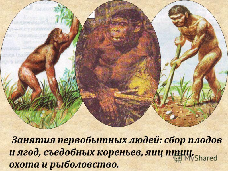 Занятия первобытных людей: сбор плодов и ягод, съедобных кореньев, яиц птиц, охота и рыболовство.