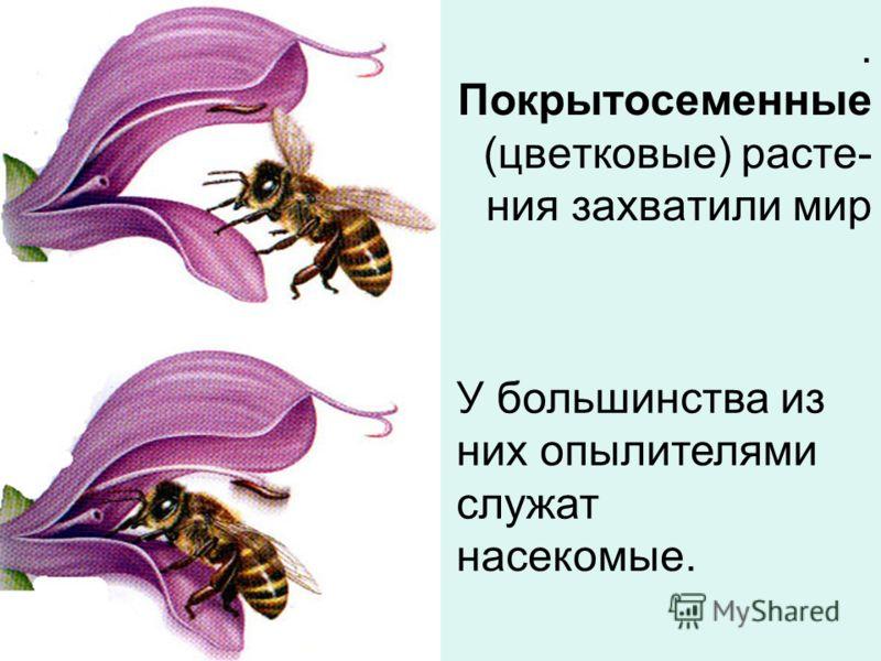 У большинства из них опылителями служат насекомые.. Покрытосеменные (цветковые) расте- ния захватили мир