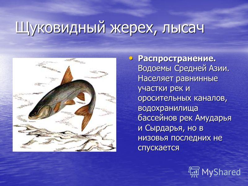 Сырдарьинский лжелопатонос Единственный в бассейне р. Сырдарья вид рода, все представители которого находятся под угрозой исчезновения. Единственный в бассейне р. Сырдарья вид рода, все представители которого находятся под угрозой исчезновения.