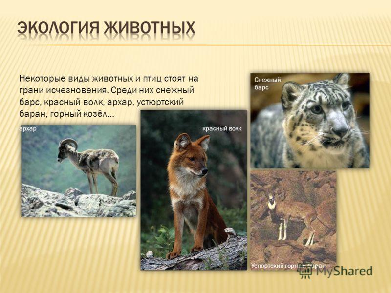 Некоторые виды животных и птиц стоят на грани исчезновения. Среди них снежный барс, красный волк, архар, устюртский баран, горный козёл… Снежный барс архаркрасный волк Устюртский горный баран
