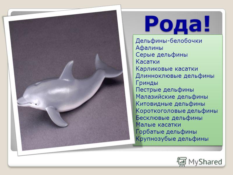 Рода! Дельфины-белобочки Афалины Серые дельфины Касатки Карликовые касатки Длинноклювые дельфины Гринды Пестрые дельфины Малазийские дельфины Китовидные дельфины Короткоголовые дельфины Бесклювые дельфины Малые касатки Горбатые дельфины Крупнозубые д