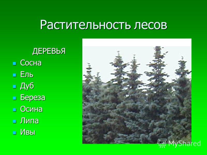 Растительность лесов ДЕРЕВЬЯ Сосна Ель Дуб Береза Осина Липа Ивы