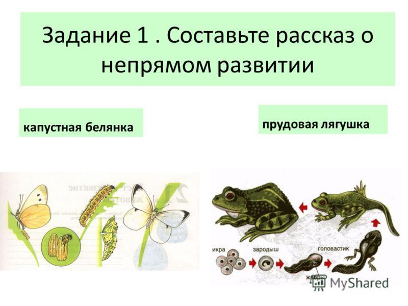 Задание 1. Составьте рассказ о непрямом развитии капустная белянка прудовая лягушка