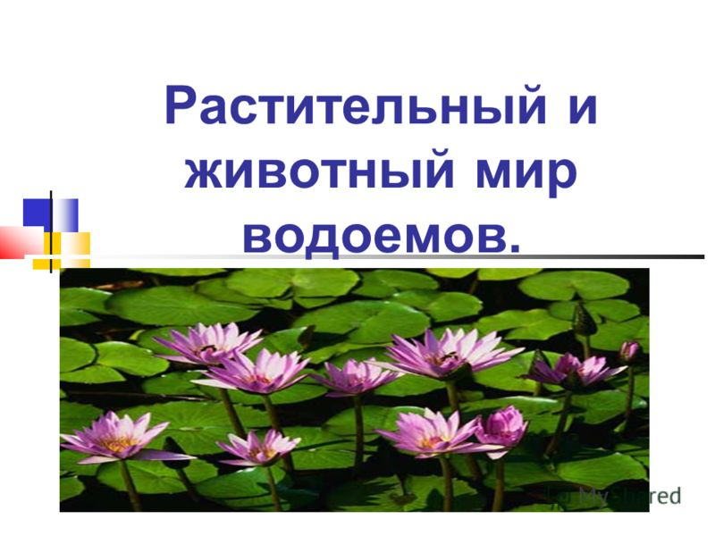 Растительный и животный мир водоемов.
