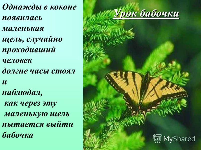 Урок бабочки Однажды в коконе появилась маленькая щель, случайно проходивший человек долгие часы стоял и наблюдал, как через эту маленькую щель пытается выйти бабочка