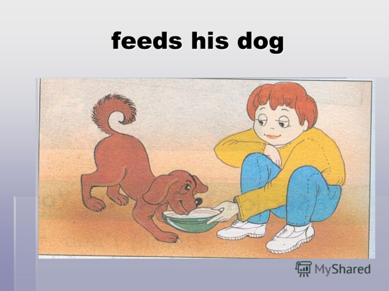 feeds his dog