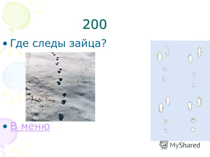 200 Где следы зайца? В меню