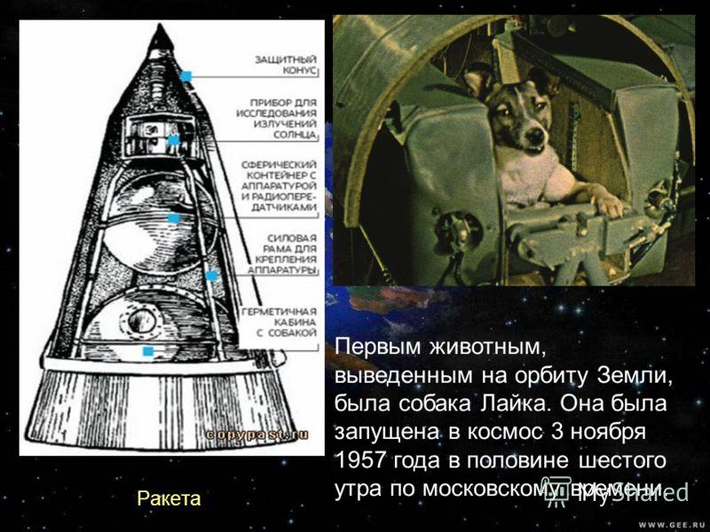 Первым животным, выведенным на орбиту Земли, была собака Лайка. Она была запущена в космос 3 ноября 1957 года в половине шестого утра по московскому времени. Ракета