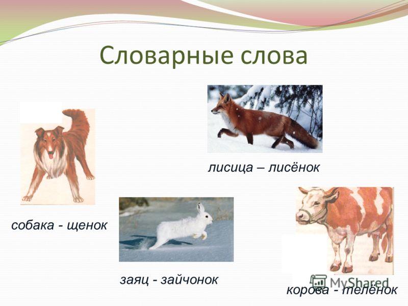 Словарные слова заяц - зайчонок лисица – лисёнок собака - щенок корова - телёнок