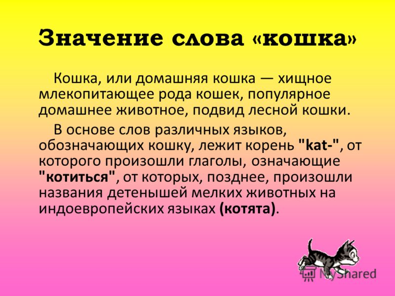 Значение слова «кошка» Кошка, или домашняя кошка хищное млекопитающее рода кошек, популярное домашнее животное, подвид лесной кошки. В основе слов различных языков, обозначающих кошку, лежит корень
