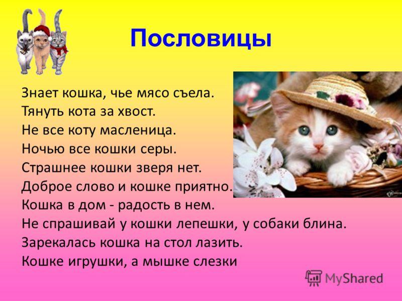Пословицы Знает кошка, чье мясо съела. Тянуть кота за хвост. Не все коту масленица. Ночью все кошки серы. Страшнее кошки зверя нет. Доброе слово и кошке приятно. Кошка в дом - радость в нем. Не спрашивай у кошки лепешки, у собаки блина. Зарекалась ко