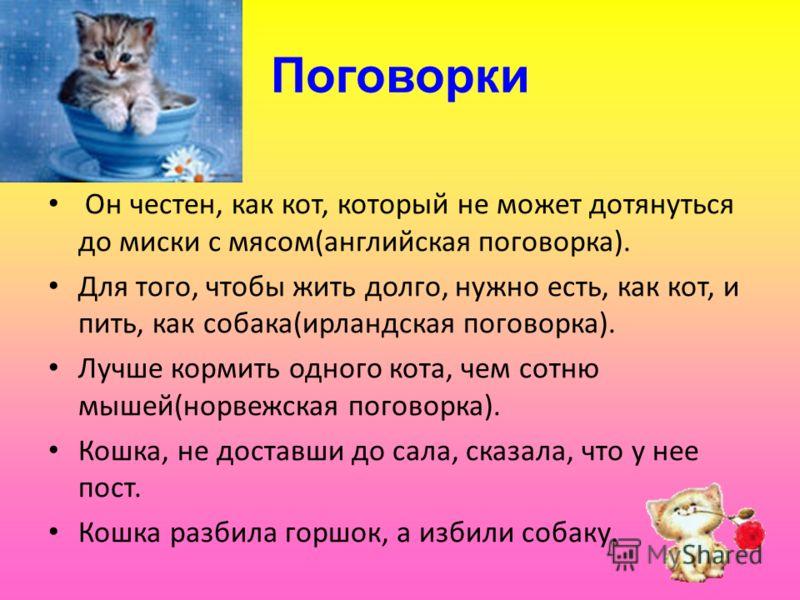 Поговорки Он честен, как кот, который не может дотянуться до миски с мясом(английская поговорка). Для того, чтобы жить долго, нужно есть, как кот, и пить, как собака(ирландская поговорка). Лучше кормить одного кота, чем сотню мышей(норвежская поговор