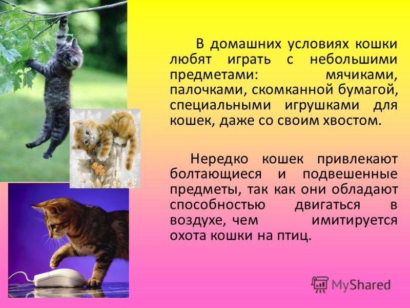 В домашних условиях кошки любят играть с небольшими предметами: мячиками, палочками, скомканной бумагой, специальными игрушками для кошек, даже со своим хвостом. Нередко кошек привлекают болтающиеся и подвешенные предметы, так как они обладают способ