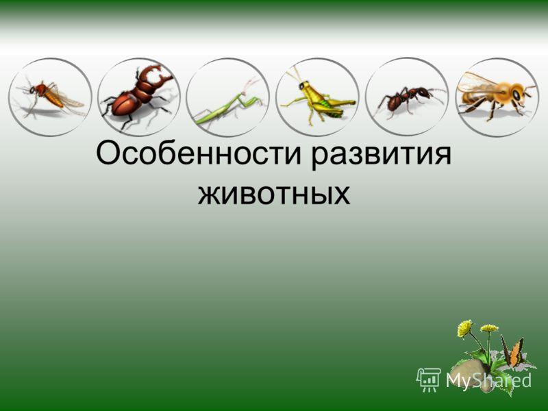 Особенности развития животных