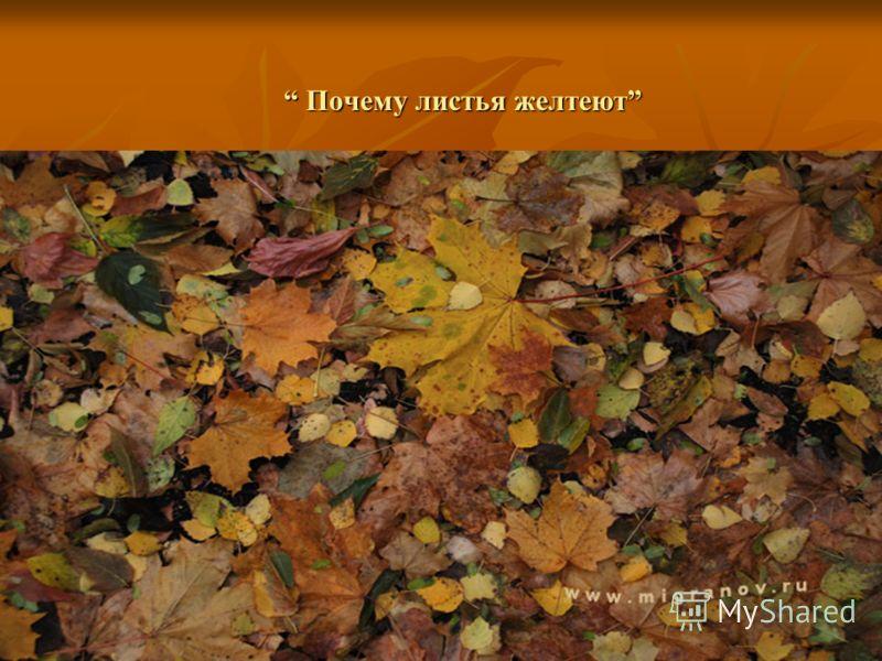Почему листья желтеют