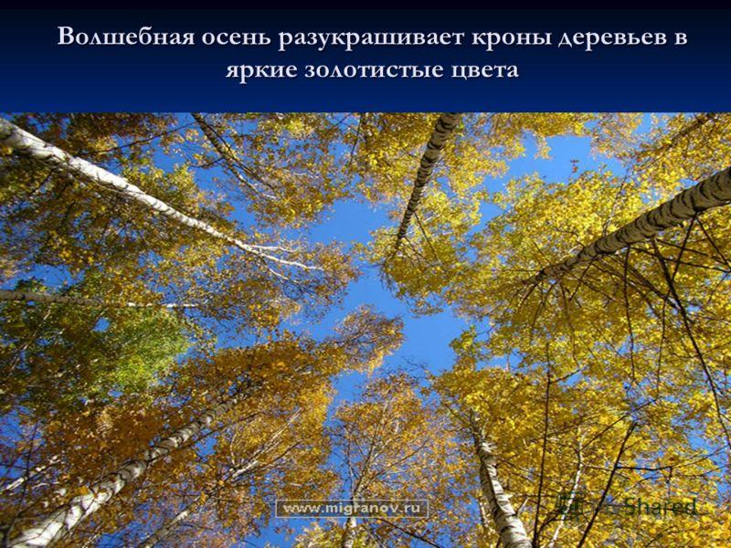 Волшебная осень разукрашивает кроны деревьев в яркие золотистые цвета