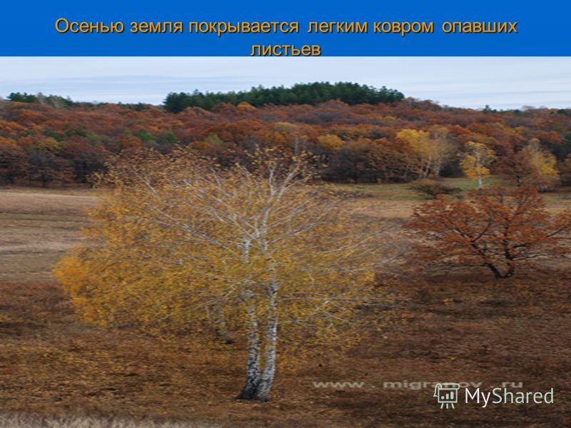 Осенью земля покрывается легким ковром опавших листьев