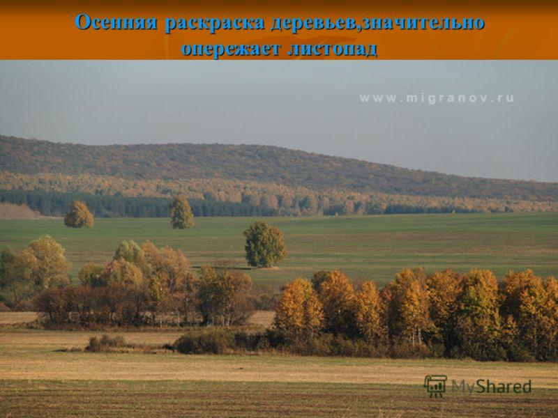 Осенняя раскраска деревьев,значительно опережает листопад