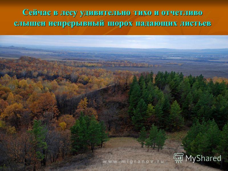 Сейчас в лесу удивительно тихо и отчетливо слышен непрерывный шорох падающих листьев