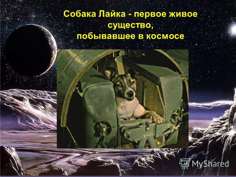 Собака Лайка - первое живое существо, побывавшее в космосе